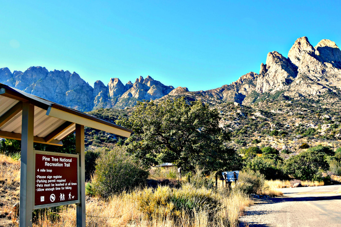 Pine Tree Loop - Organ Mountains, New Mexico