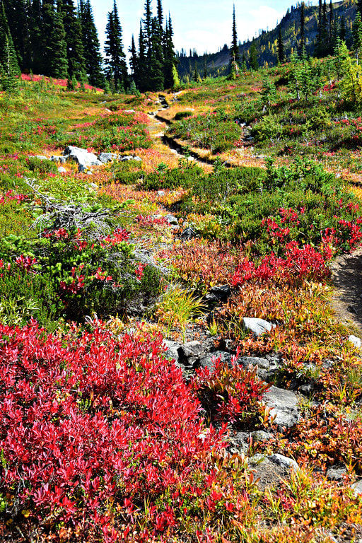 Fall Foliage - Maple Pass Loop - North Cascades National Park