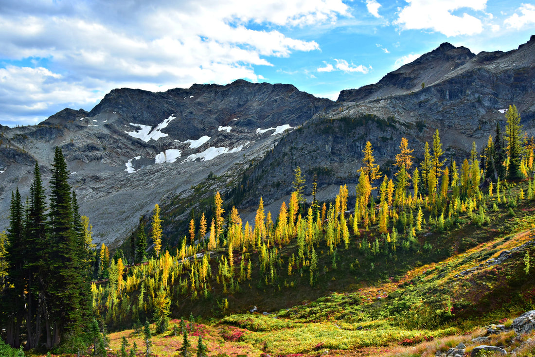 Larches - Maple Pass Loop - North Cascades National Park