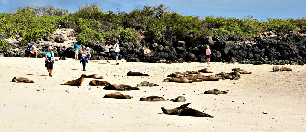 Galapagos Islands Santa Fe Island Sea Lions