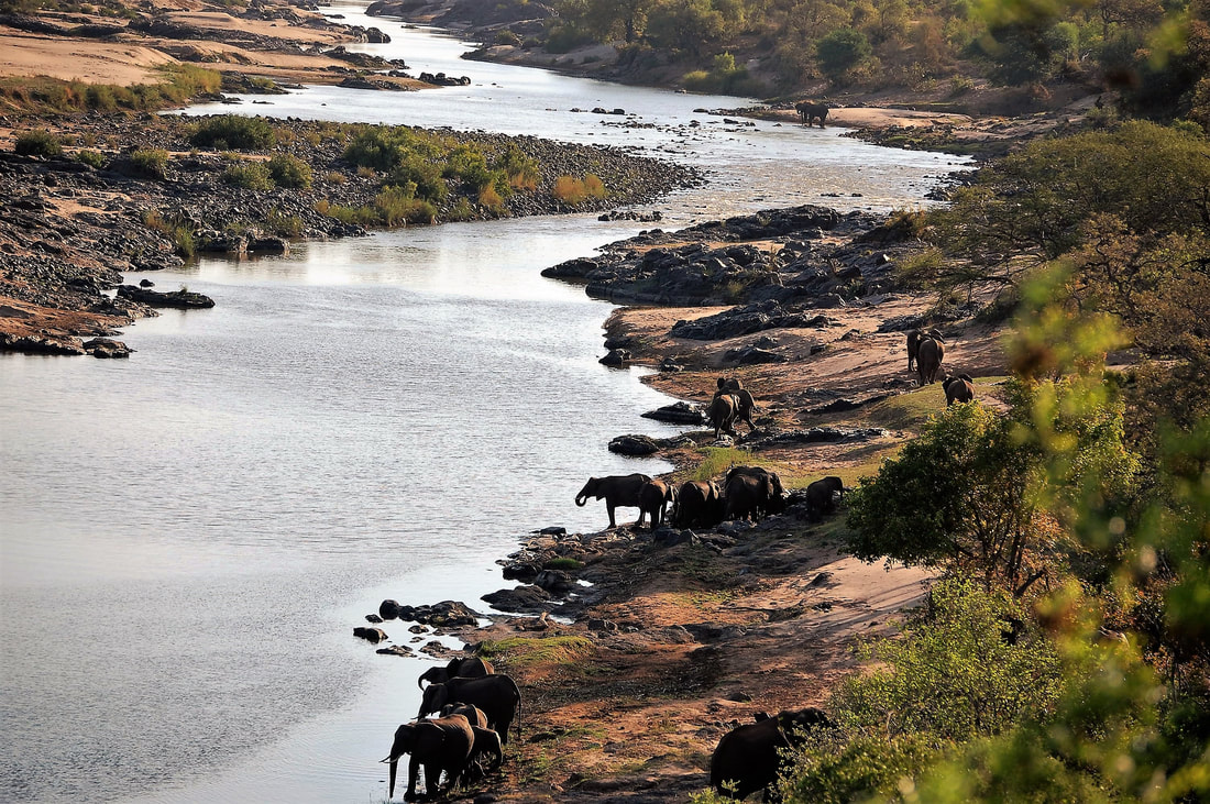 Elephant Herd, Olifants River Lookout, Kruger National Park, South Africa