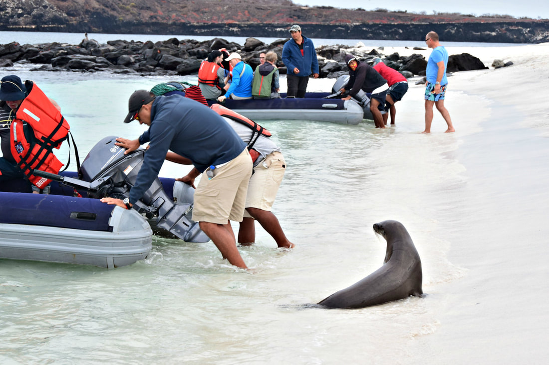 Galapagos Islands Mosquera Islet