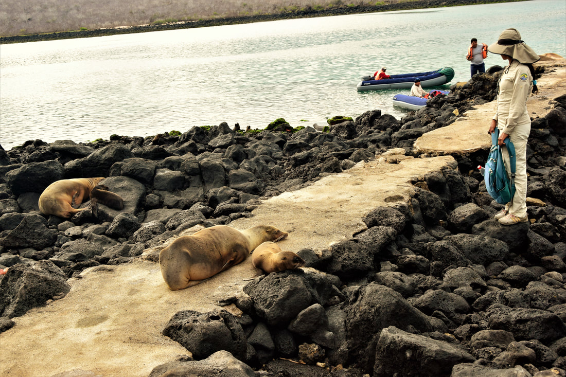 Galapagos Islands Isla Lobos Sea Lions