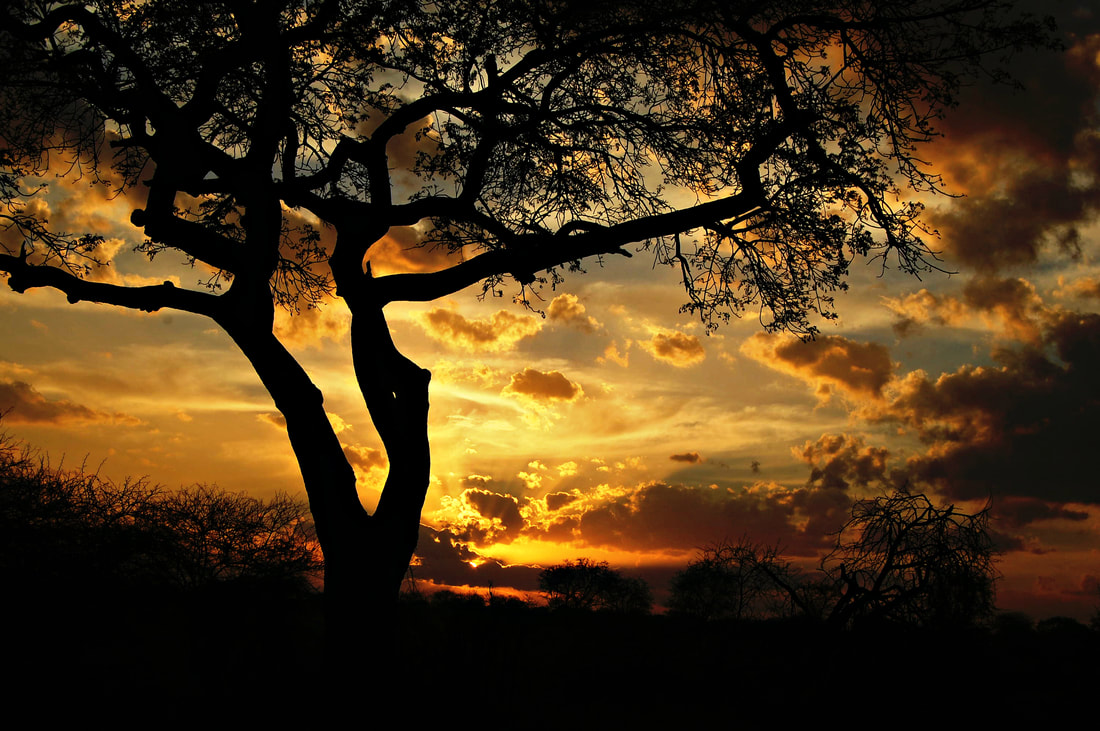 Sunset, Satara, Kruger National Park, South Africa