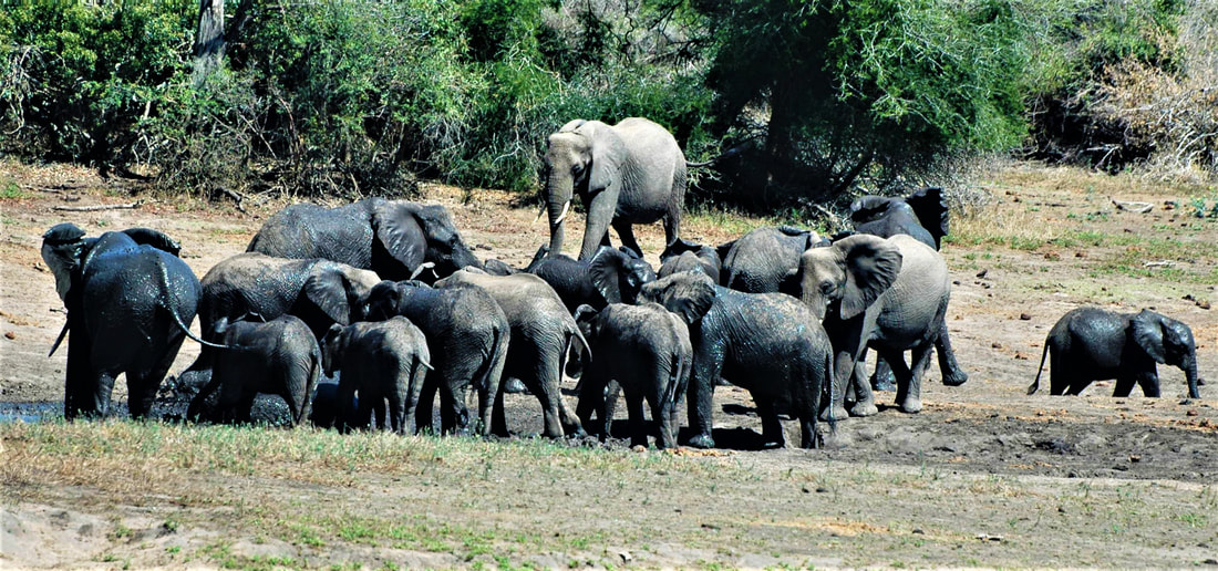 Elephant Herd, Nsemani Dam, Kruger National Park, South Africa