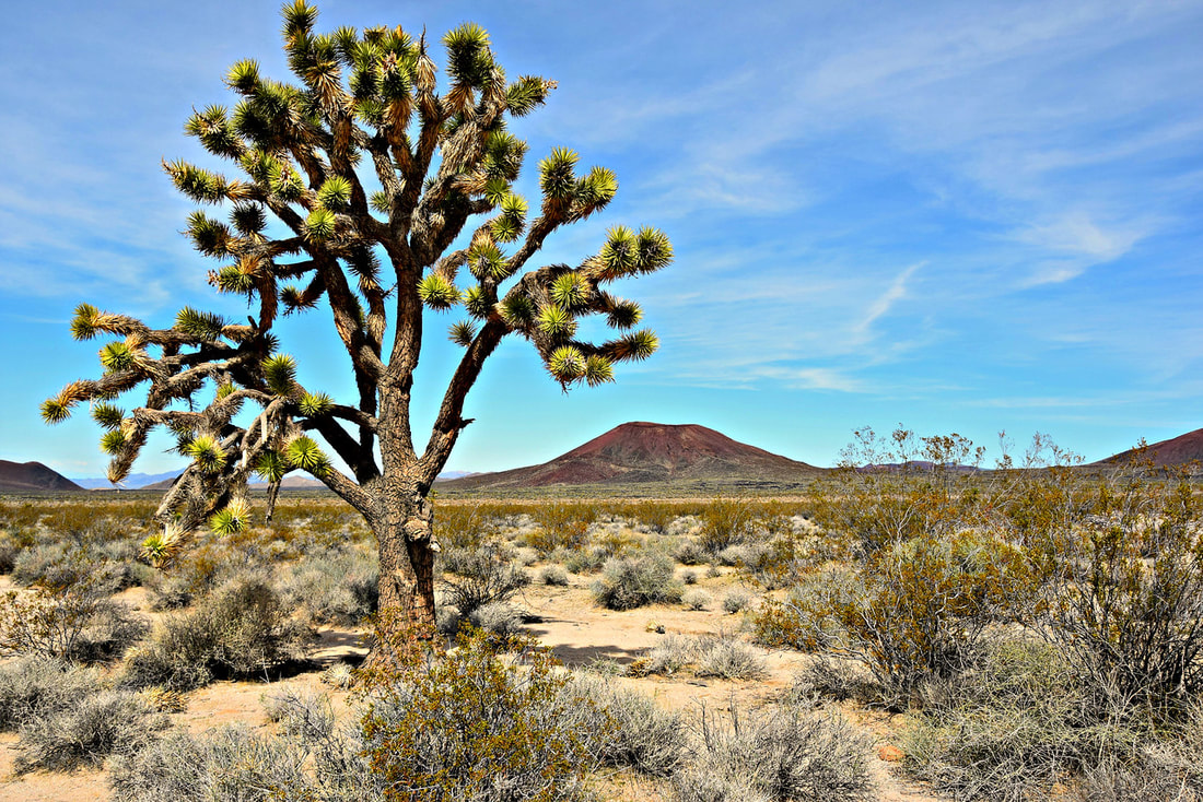Joshua Tree - Mojave National Preserve